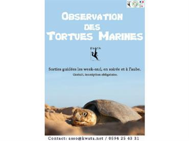 Observation_tortues_marines